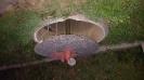 Brunnendeckel